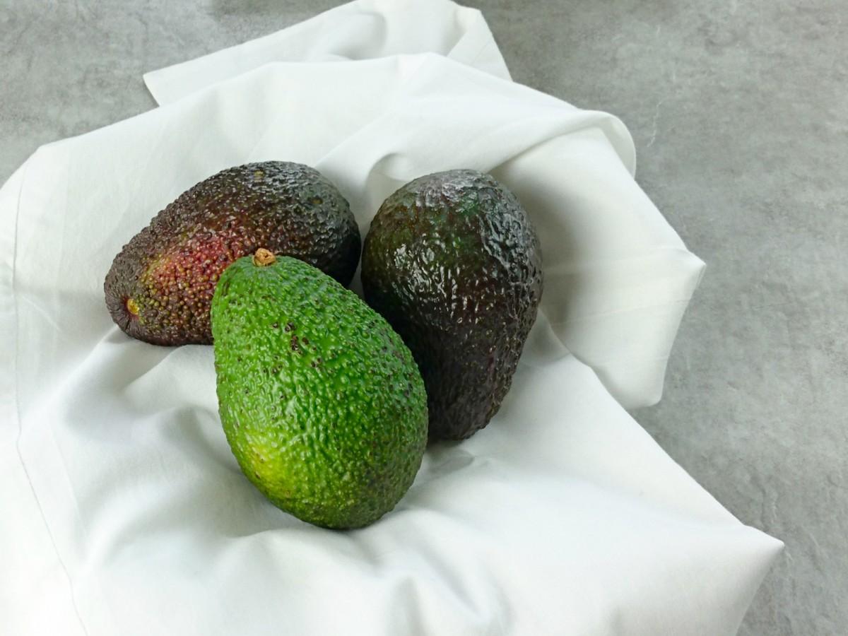 Avocadodreier